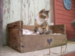 cat-bed-pallet