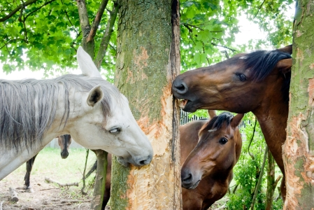 HappyHorseHealthyPlanet_Horse eating trees
