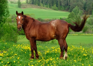 Happy Horse Healthy Planet _BCS8