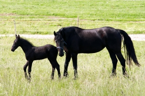HappyHorseHealthyPlanet_mare with colt