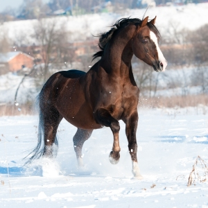 HappyHorseHealthyPlanet_Winter