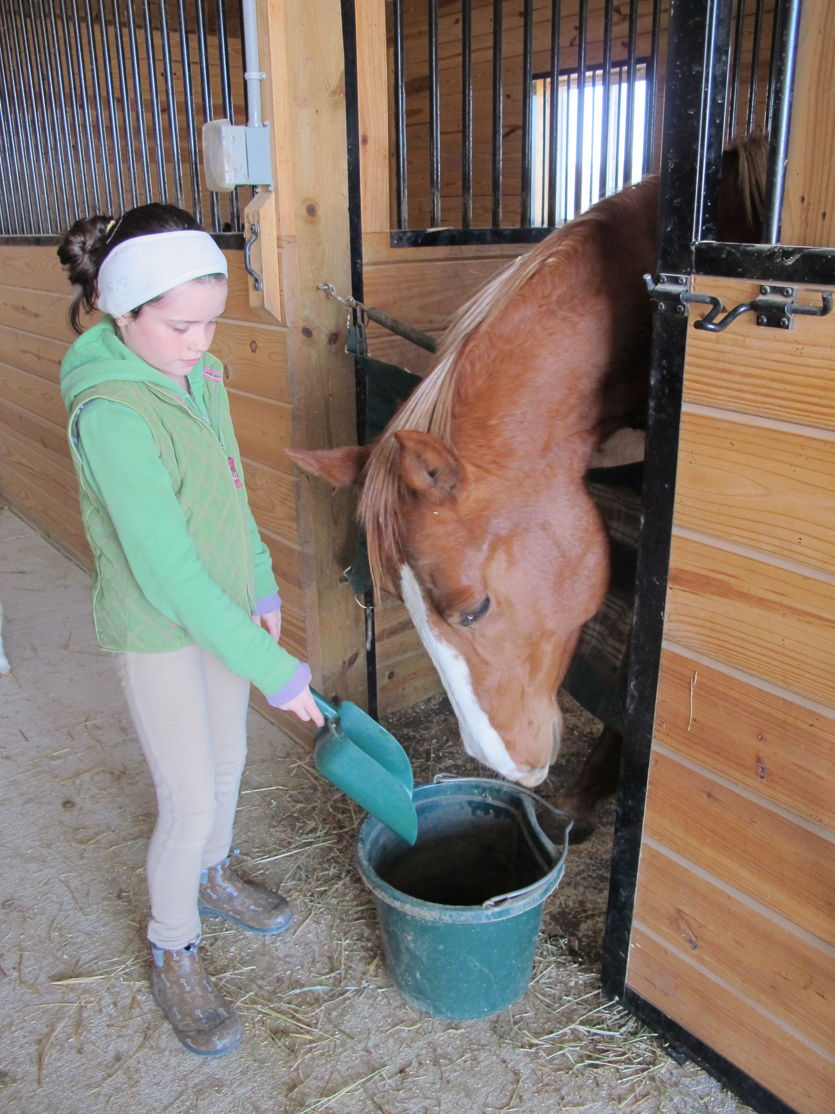 Five Common Mistakes Made When Feeding A Horse Ecoequine