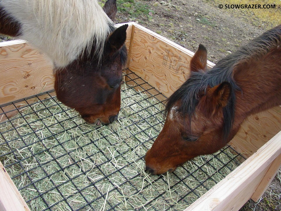 [Image: slow-feeder-two-horses-sharing.jpg]