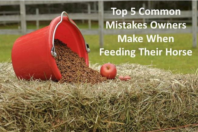 Five Common Mistakes Made When Feeding A Horse | EcoEquine