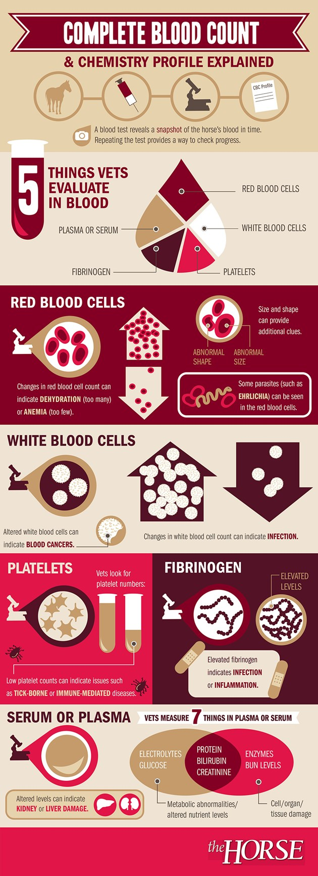 complete-blood-count-infographic2