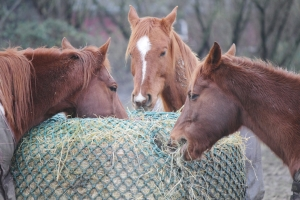 Happy Horse Healthy Planet.6
