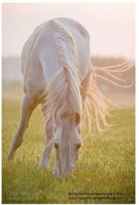 Happy Horse Healthy Planet.com.18