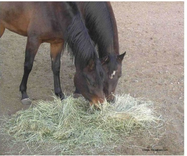 Happy Horse Healthy Planet.Hay Tips. smell