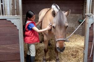 Little girl brushing her favorite horse