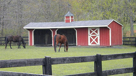 Rain Rot Remedies For Your Horse Ecoequine