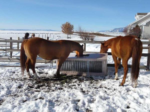Tips For Winter Storm Horse Care Preparedness Ecoequine