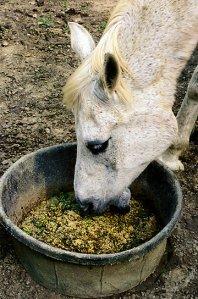 Happy Horse Healthy Planet.com.Mud.2