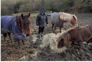 Happy Horse Healthy Planet.com.Mud