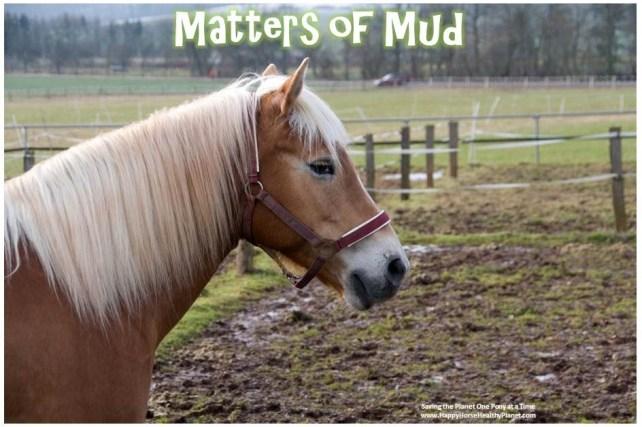 Happy Horse Healthy Planet.com.MUDCOVER