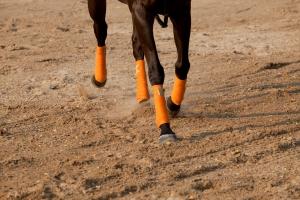 leg of running horse