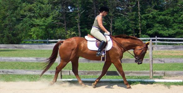 horsepractice