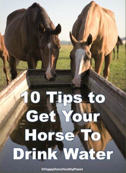 Happy Horse Healthy Planet.com._Water Tips