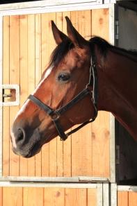 HappyHorseHealthyPlanet_Horseinstall