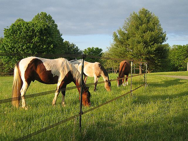 5 things wild horses can teach us about horse care ecoequine for Horse farm