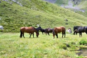 HHHP_Wild Horses