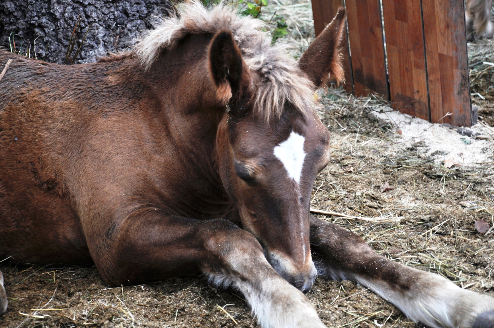 Things Wild Horses Can...