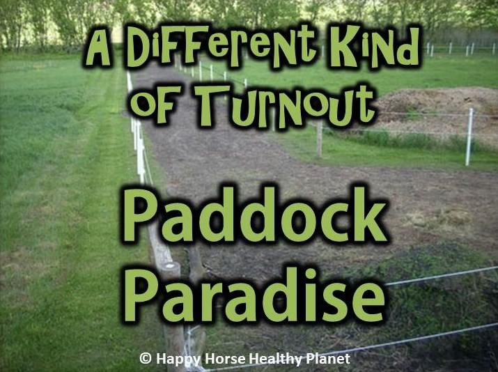 A Different Kind Of Turnout Paddock Paradise Ecoequine