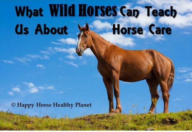 HHHP_Wild Horse Cover