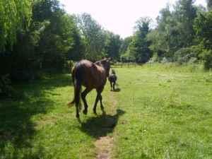horses make tracks in pasture