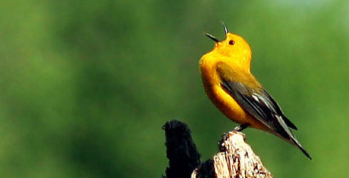 birds-primary-header