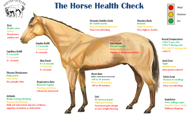 EcoEquine-HorseHealth Check