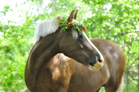 flower-crown-horse-horses-horse-with-flower-crown-Favim.com-2496339