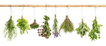 Horse Hippie herbs