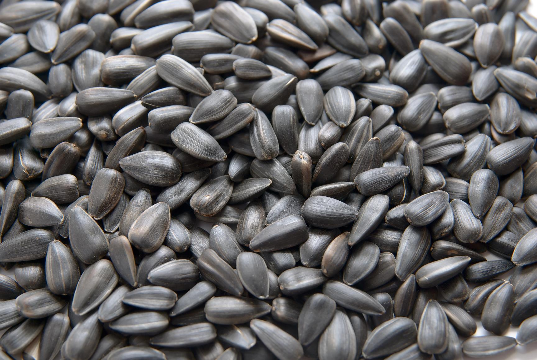 Las semillas de girasol aumentan la economía de la economía de California - Green Blog - ANR Blogs