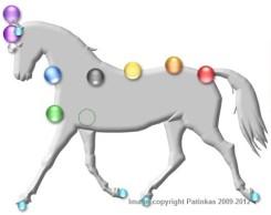 a_horse_chakras_pic-copy
