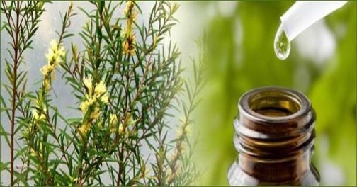 Tea-Tree-Oil-for-Skin.