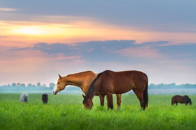 Horse Hippie
